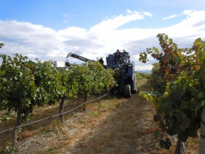 hyatt-vineyards-harvester-in-the-vineyard-harvest